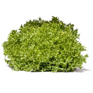 Salanova grün Crispy