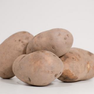 Kartoffeln Agria ungewaschen
