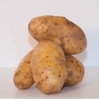 Kartoffeln Agria gewaschen